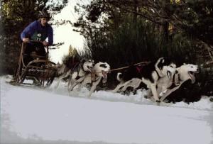 Robyn Lewis 4 dog