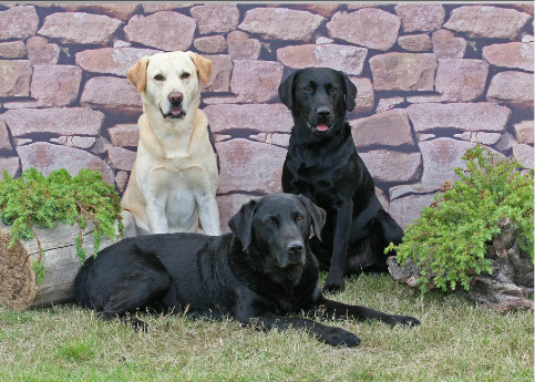 My dogs look fantastic and are full of energy without beingnutters!