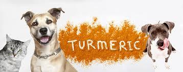 Turmeric-dogs