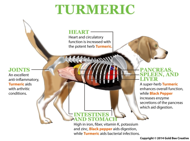 Turmeric_dog_diagram