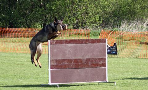 Ipo dog training uk