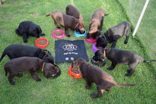 Pups1