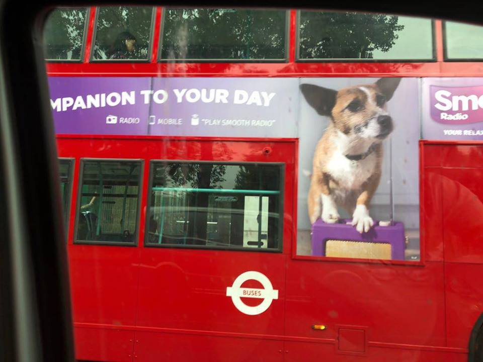 Jinty on a Bus