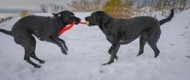 Wendy Tilly-mint #pushyourmush My girls Abbie and Holly playing their own push pull game