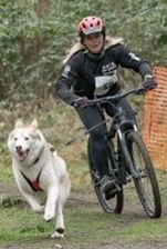 Emma Maunder #pushyourmush Manny at his 1st bssf race at Pembrey! We weren't fast but we had a great time 😊