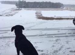 Charlotte Wilkinson Gundogs work in winter too! 😁 #PushYourMush #poweredbyCSJ