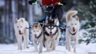 Michael Clapperton #pushyourmush Siberspeed huskies in the Scottish snow