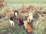 Julie Nicholds #workingdogs all on That'll do x