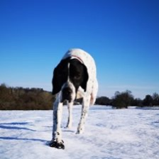 Kerry Roberts #pushyourmush Issy the pointer enjoying the snow in Hampshire.