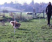 我是个顽固的小羊羔——我的贝克曼·贝克曼,这只小熊。我从没见过那个人以前的时候,没见过。他把墙堵了,但我是个巨大的怪物