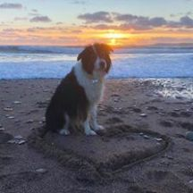 Carol Aleknavicius - Gracie, my sweet lovely girl enjoying the beach in Pembrokeshire 💞