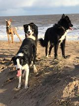 Jackie Kenny - Some of our beauties enjoying the beach