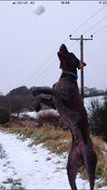 Julie Tulleth #pushyourmush Oakley snowball catching