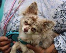 尼娜·沃尔多夫——不是个可爱的小狗,但我们是鲍勃