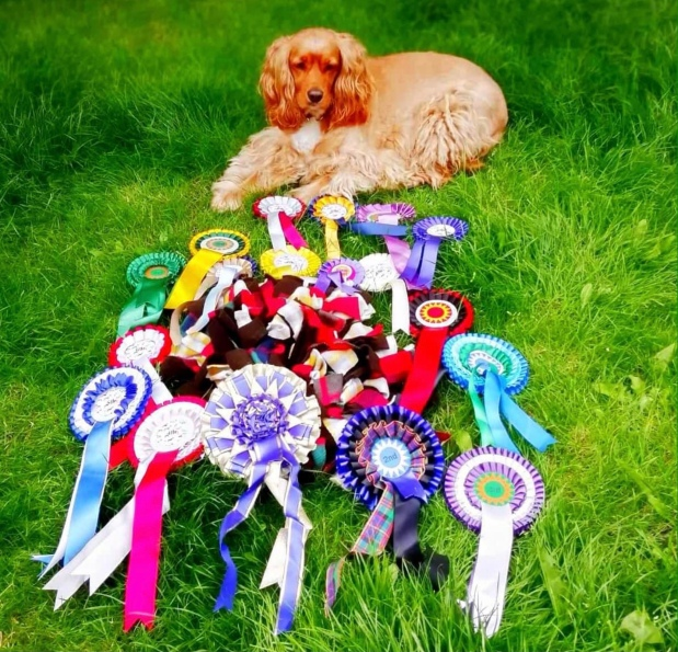 Winners take all the CSJ prizes at South Warwickshire Canine Club July FunShow